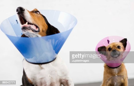 Dogs with cone collars