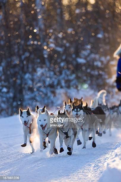 Dogsled team rounding corner.