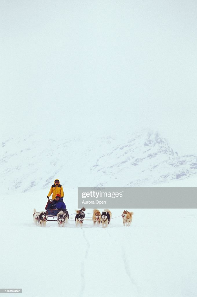 Dogsled team travels through snowstorm across Meta Incognita Peninsula, Baffin Island, Nunavut, Canada. : Stock Photo