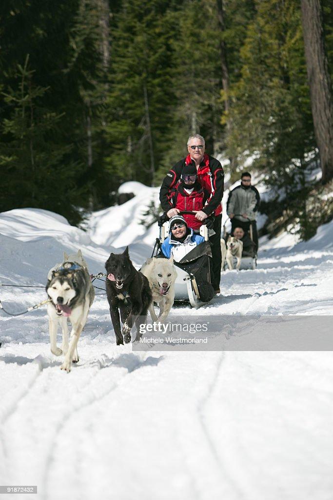 Dogsledding, Canada.