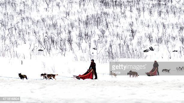 Dogsledding in the Norwegian landscape