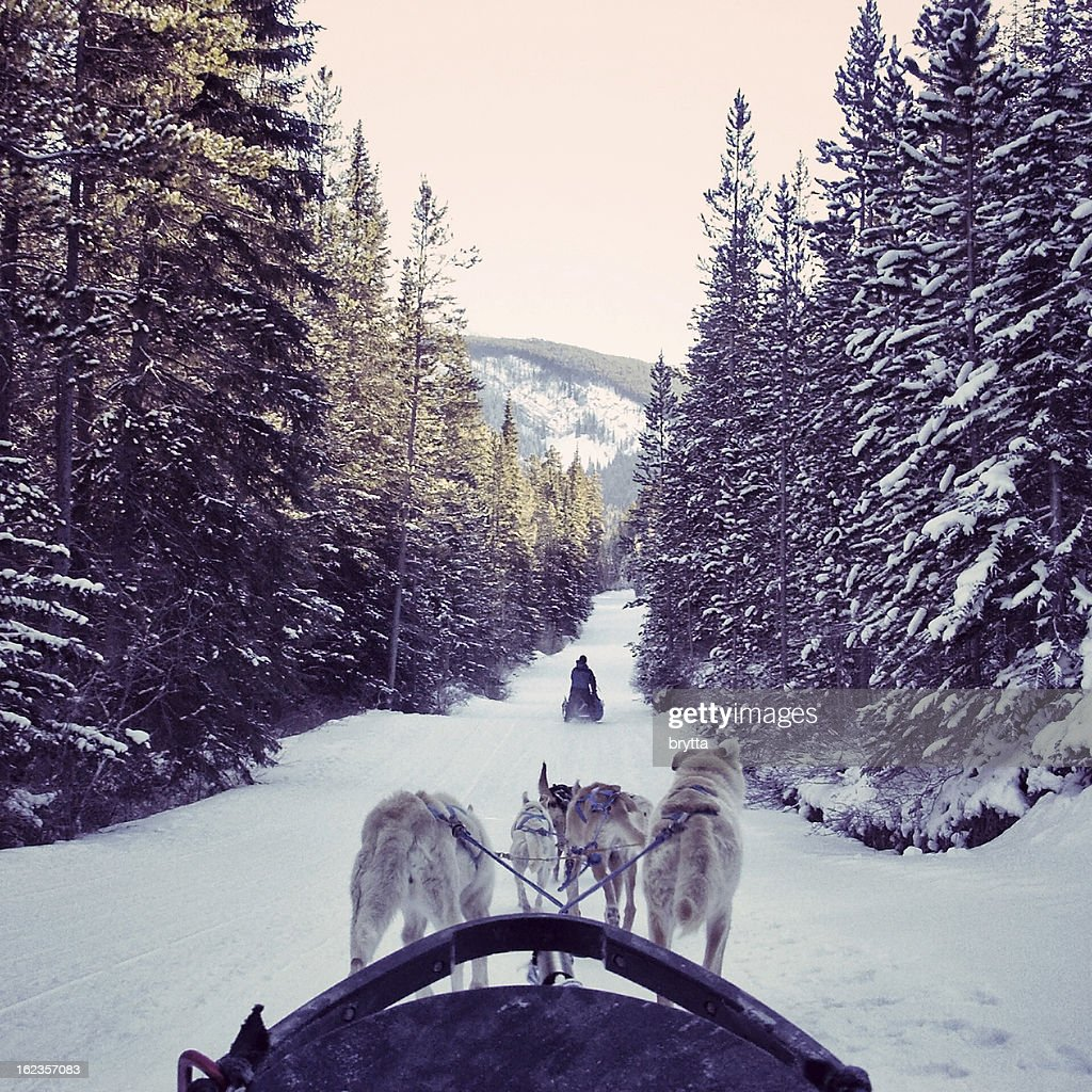 Dogsledding in the snow in the Canadian Rocky Mountains