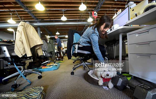 DogVacay employee Stephanie Kim pets Bichon Frise Fin beside her computer terminal at company offices in Santa Monica California on March 21 2016...