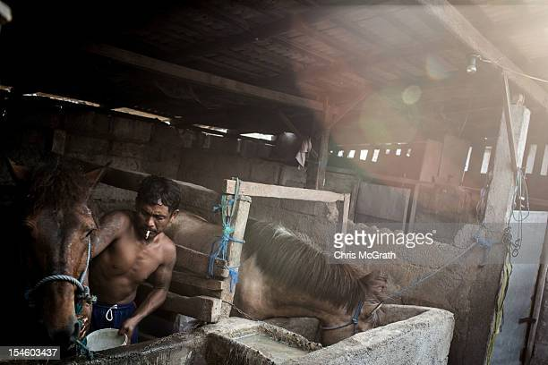 Dokar driver Made Puja washes his horse down after a days work on October 14 2012 in Denpasar Bali Indonesia The Dokar is traditional local transport...