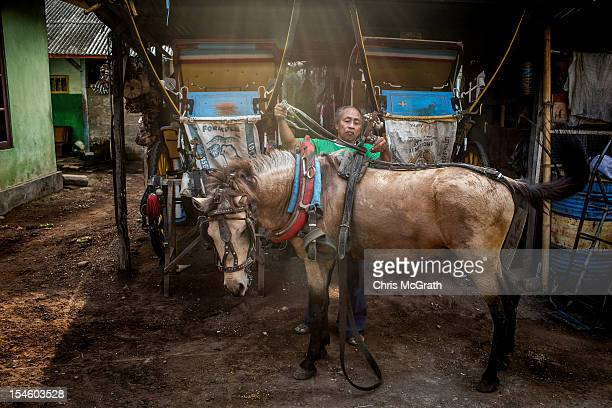 Dokar driver Nyoman Mantra Manik takes off his horses harness after a days work on October 15 2012 in Denpasar Bali Indonesia The Dokar is...