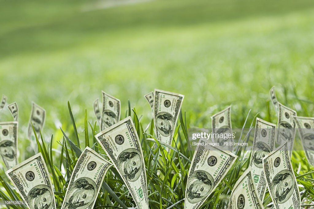 100 dollar bills growing in grass : Stock Photo