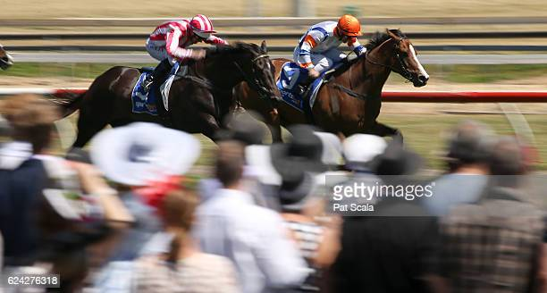 Dollar for Dollar ridden by Luke Currie wins SUEZ McKellar Mile at SportsbetBallarat Racecourse on November 13 2016 in Ballarat Australia