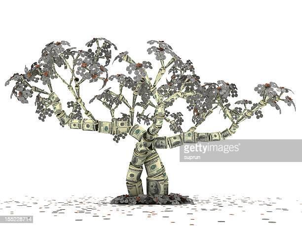 Dollar Money Tree