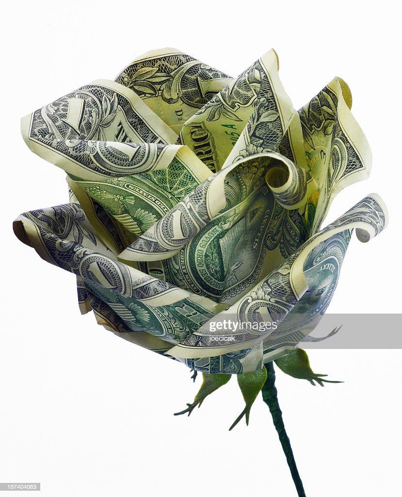 Dollar Rose Close-up