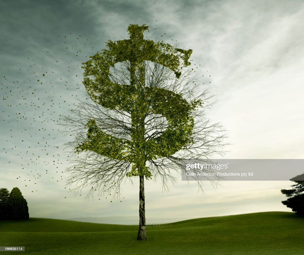 Dollar sign carved in tree in field : Stock Photo