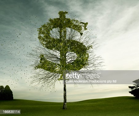 Dollar sign carved in tree in field