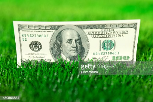Dollars in the Grass : Stock Photo