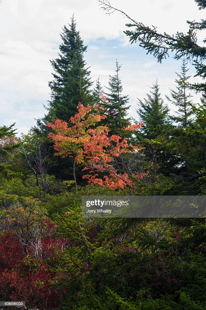 Dolly Sods, Autumn, WV : Stock-Foto