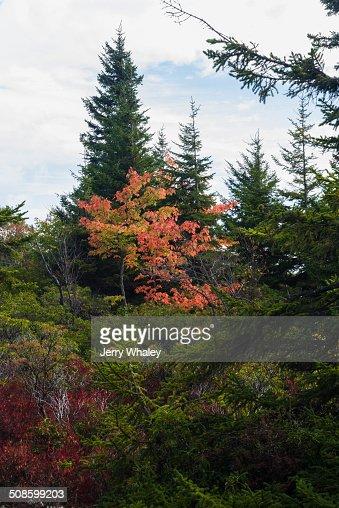 Dolly Sods, Autumn, WV : Foto de stock