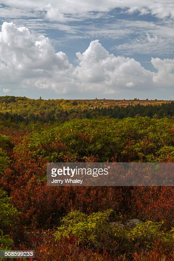 Dolly Sods, Autumn, WV : Foto de stock