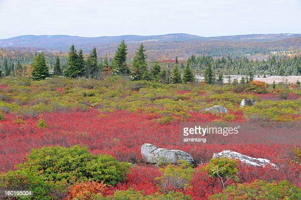 Dolly Sods Wilderness in Autumn