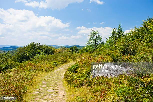 Dolly Sods Wilderness In West Virginia, USA