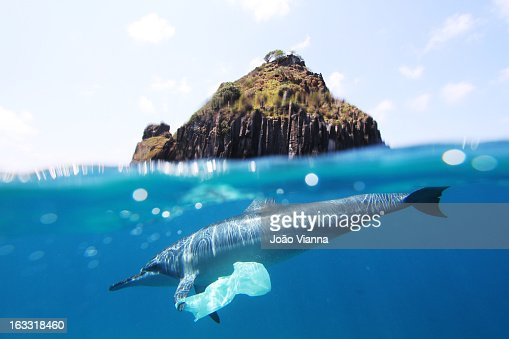 dolphin and plastic bag