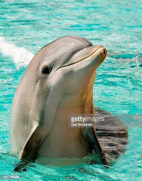 Dolphin emerging from water