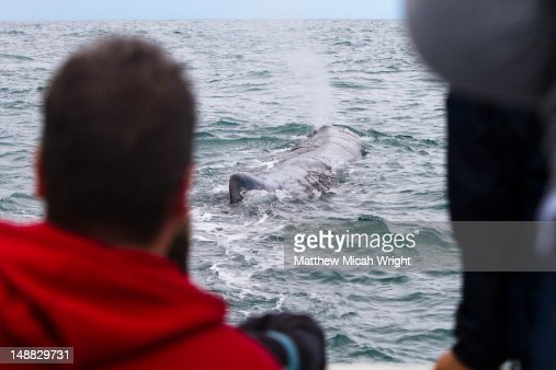 A dolphin expidition boat spots a whale along their path in Kaikoura : Stock Photo