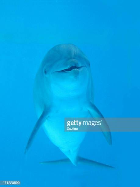 Golfinho-Olá