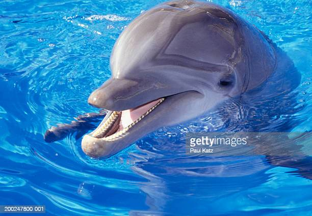 Dolphin in pool, Close-up of head