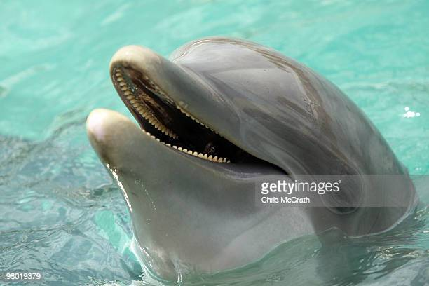 A dolphin is seen during day two of the 2010 Sony Ericsson Open at Miami Seaquarium on March 24 2010 in Key Biscayne Florida