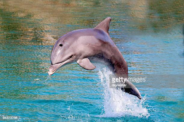 dolphin jump out of the water