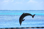 Dolphin Jumping Over Sea Against Sky