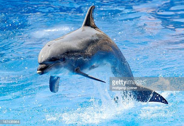 Delphin-jumping