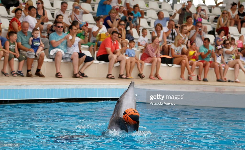A Dolphin plays with a ball during a show as mostly Ukrainian, Serbian and German tourists watch it in Antalya, Turkey on June 27, 2016.