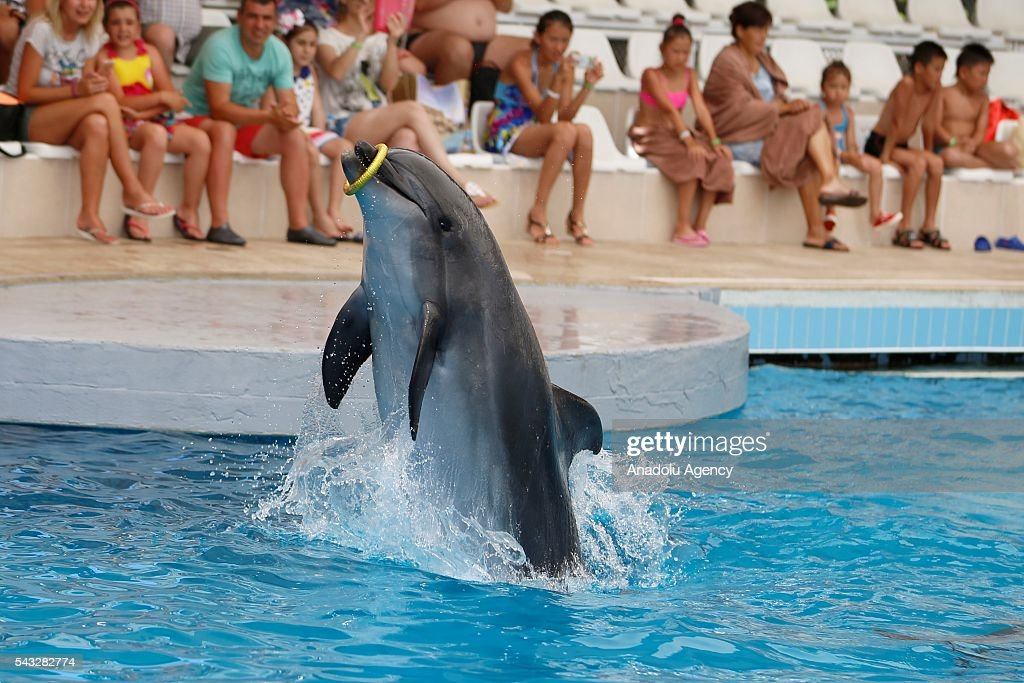 A Dolphin plays with a toy during a show as mostly Ukrainian, Serbian and German tourists watch it in Antalya, Turkey on June 27, 2016.