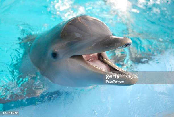 Dolphin with mouth open