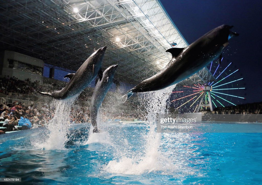 Dolphines jump during the night aquarium event at Port of Nagoya Public Aquarium on July 19, 2014 in Nagoya, Aichi, Japan.