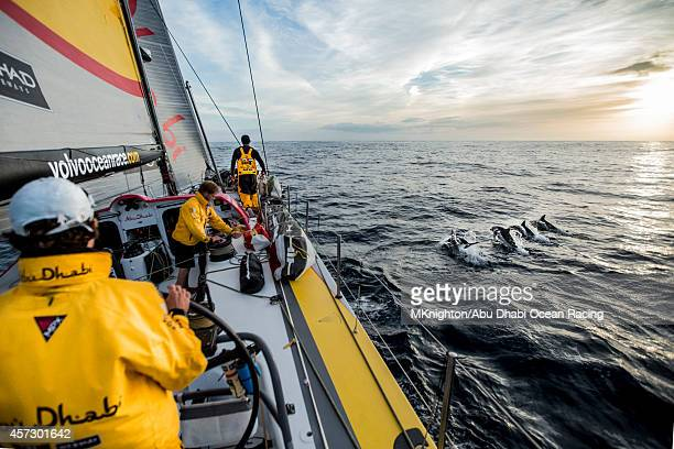 Dolphins escort 'Azzam' as she leads the race en route to the Canary Islands onboard Abu Dhabi Ocean Racing during Leg 1 of the Volvo Ocean Race on...