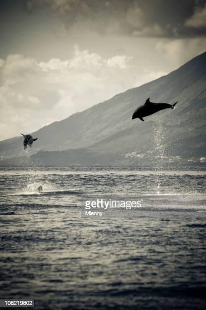 Delfini saltare nell'oceano, bianco e nero