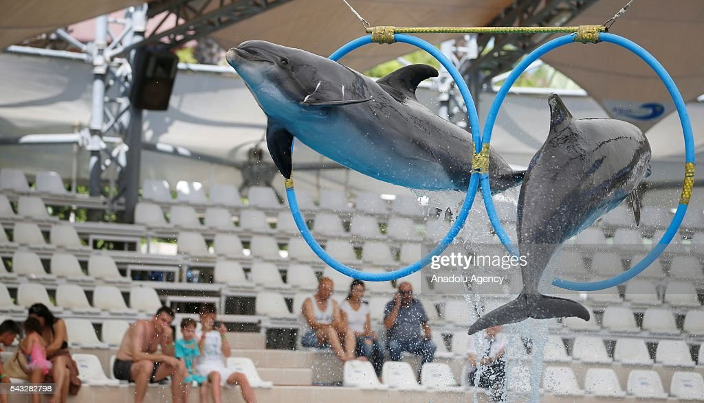 Dolphins pass through circles during a show as mostly Ukrainian, Serbian and German tourists watch it in Antalya, Turkey on June 27, 2016.