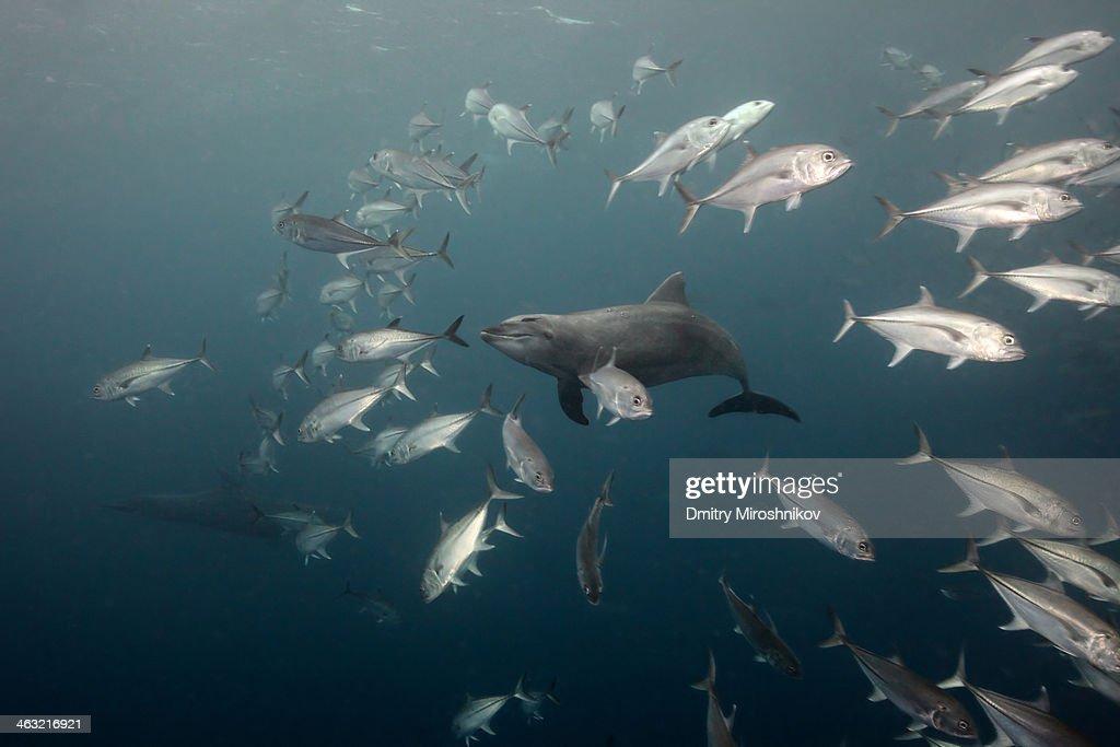 Dolphins' Smile : Stock Photo