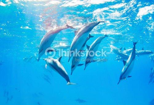 dolphins swimming underwater : Stock Photo