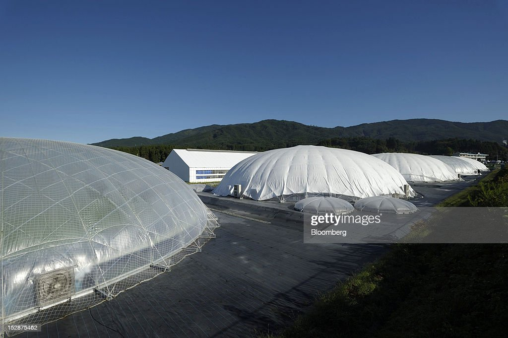 Dome-shaped vegetable plants stand at Granpa Farm Rikuzentakata, in Rikuzentakata City, Iwate Prefecture, Japan, on Wednesday, Sept. 26, 2012. A total of 8 dome-shaped hydroponic vegetable plants operated by Granpa Farm Rikuzentakata, a group farming subsidiary of Granpa Co. which was opened last month as part of the region's reconstruction efforts in an area damaged by the tsunami following the earthquake on March 11, 2011, produces 3,600 heads of lettuce a day. Photographer: Akio Kon/Bloomberg via Getty Images