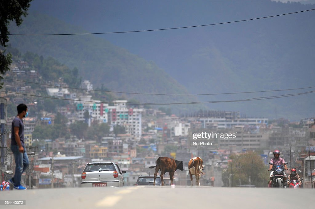 Domestic animals moving on a open road as national-wide local transportation strike by transport entrepreneurs at Kalanki, Kathmandu on May 26, 2016.