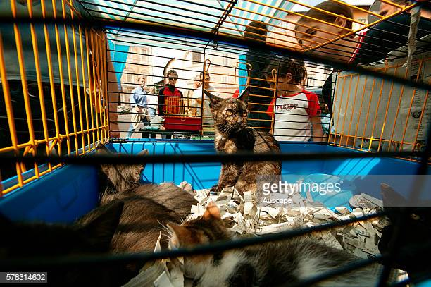 Domestic cat Felis catus litter of kittens in cage outdoors Rome Italy