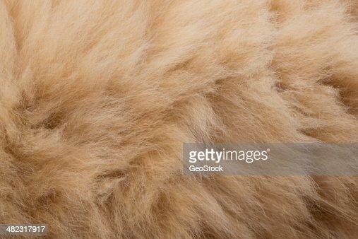 Domestic cat fur, full frame