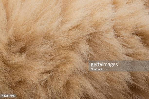 Domestic cat fur, full frame