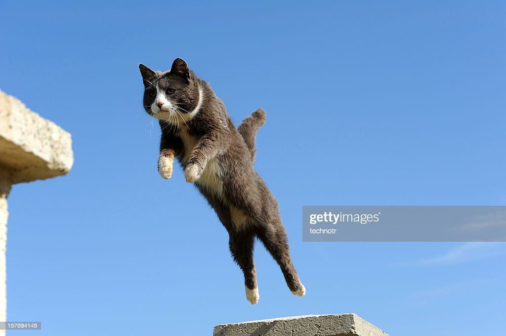 Domestic cat jumping : Stock Photo