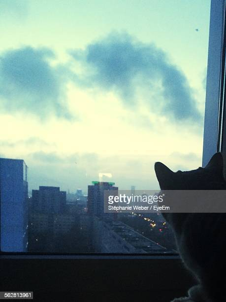 Domestic Cat Looking Through Window At City
