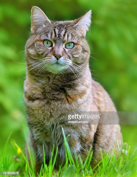 Domestic cat portrait in grass