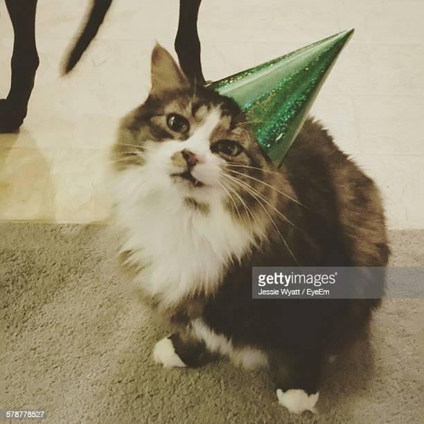 Domestic Cat Wearing Party Hat