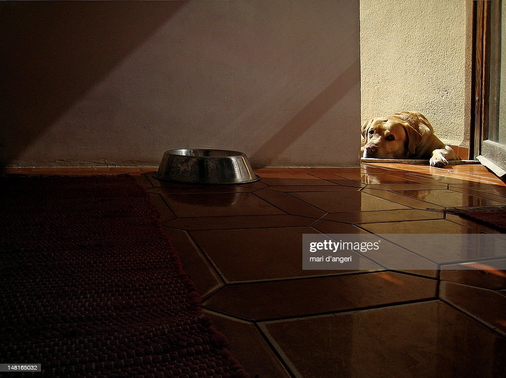 Domestic dog : Stock Photo