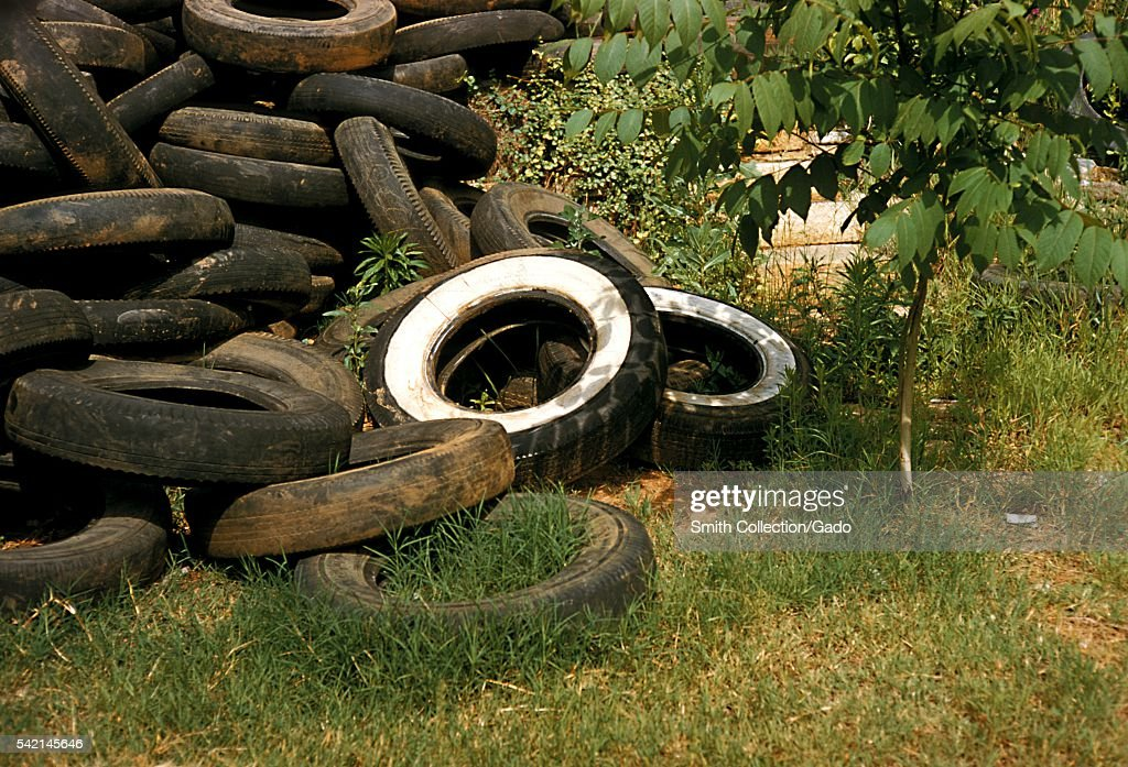 Domestic mosquitoes are often found breeding in old discarded tires 1975 Domestic species are those that breed close to human habitation Old...